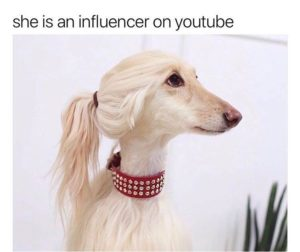 This dog with a ponytail is an influencer on youtube.